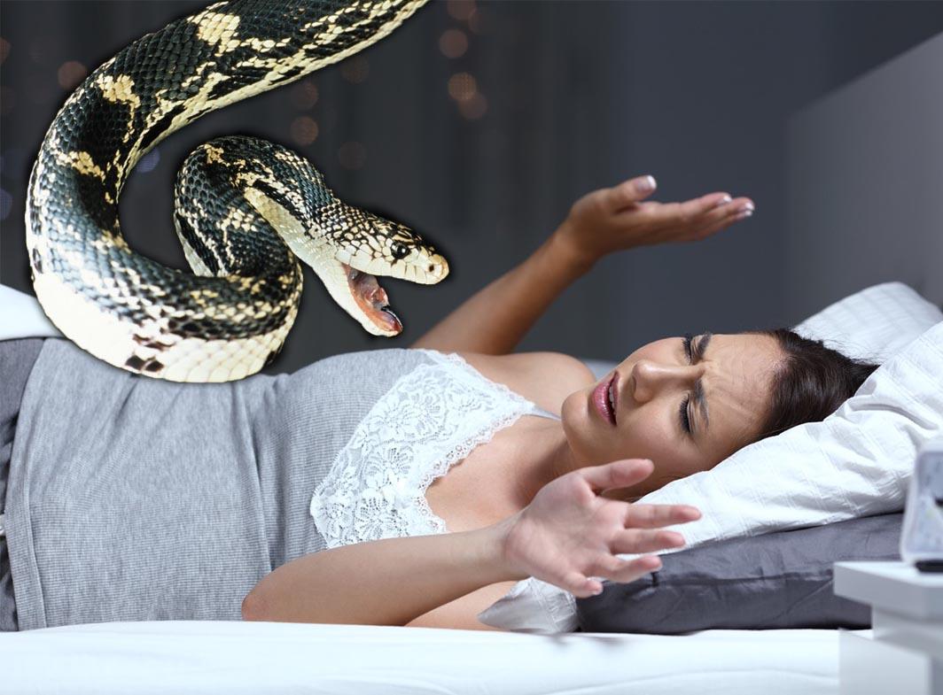 šta znači sanjati zmije