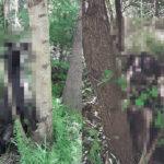 (UZNEMIRUJUĆE FOTOGRAFIJE) Bizaran prizor kod Šapca: OBESILI pse o drvo, policija traga za monstrumima