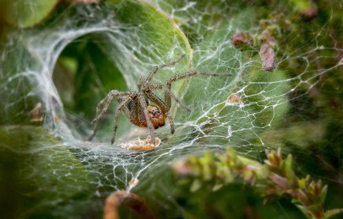 Ne podnosite paukove? Jednostavan trik kako da ih ZAUVEK izbacite iz svoje kuće