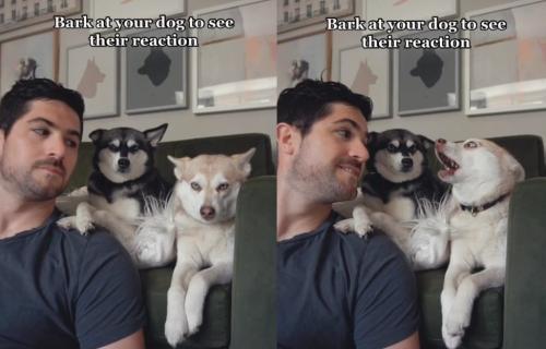 Zalajao je na pse da bi video njihovu reakciju, a onda je usledilo IZNENAĐENJE (VIDEO)