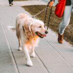 SMEHOTRESNO! Dečak (9) očitao bukvicu vlasnicima pasa koji ne čiste za svojim ljubimcima (FOTO)