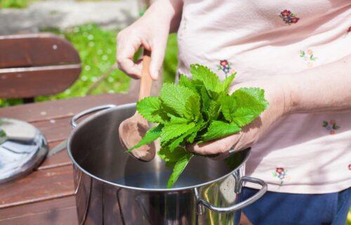 Pomaže kod probave i BOLOVA u želucu, a mogu da ga piju i deca: Čaj od MATIČNJAKA kao prirodni lek