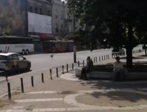 HIT scena u centru Beograda: Karađorđevom ulicom protrčala DIVLJA ŽIVOTINJA, prolaznici u šoku (VIDEO)