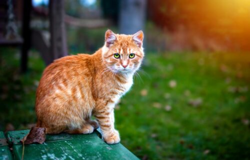 Moja mačka je lopov: Žena stavila natpis nasred travnjaka i postala hit na internetu (FOTO)