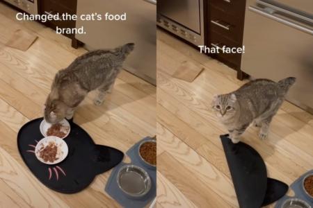 Promenila je mački vrstu hrane, a ova je jasno pokazala šta o tome MISLI (VIDEO)