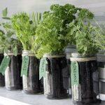 Prirodni lekovi: Šest biljaka koje mogu da vam pomognu da regulišete visok krvni pritisak