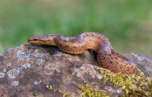 Sumnjala je da u kući ima zmije, a nadležni su ostali ZAPREPAŠĆENI kada su stigli na lice mesta