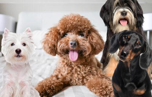 psi koji se ne linjaju