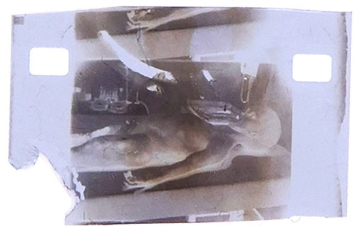 "Prodaje se KADAR iz kontroverznog filma ""Obdukcija vanzemaljca"": Početna cena je MILION dolara (VIDEO)"