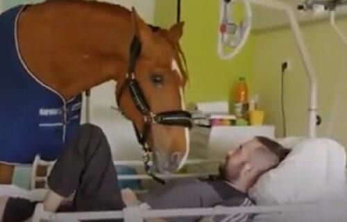 """Konj koji ohrabruje pacijente: """"Doktor Pejo"""" sam bira koga će da poseti, a to radi na ovaj način (VIDEO)"""
