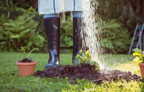 KVASAC za cveće - PRIRODNO đubrivo od kojeg će biljke bujati