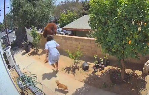 Devojka istrčala u dvorište i golim rukama napala medveda kako bi spasila pse (VIDEO)