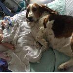 Pas osetio da je beba na SAMRTI: Svi su plakali kad su videli šta je URADIO (FOTO)