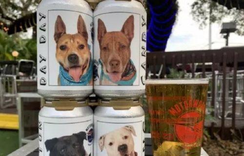 Pivara prodaje limenke sa slikama NAPUŠTENIH PASA: Ovim stvorenjima potrebna je ljubav i dom (VIDEO)