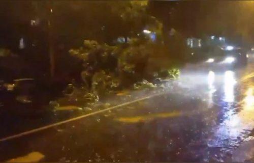 HAOS na Banovom brdu: Drvo palo nasred ulice, oluja napravila veliku ŠTETU (VIDEO)