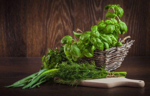 Stara verovanja: Kuća koja ima ovu biljku ne može da bude siromašna, ona privlači novac i čuva zdravlje