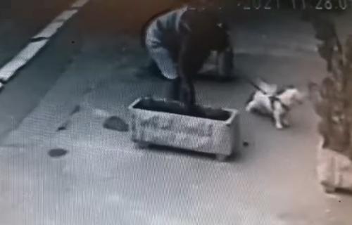 BIZARAN snimak iz beogradskog naselja: Šetala psa, prišla žardinjeri, pa izazvala BES komšija (VIDEO)