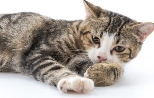 Srušila je sve predrasude: Ova mačka naprosto obožava da se KUPA (VIDEO)