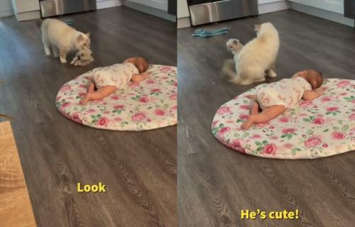 Mački se dopao novi član porodice, pa je odlučila da ga upozna sa svojim MAČETOM (VIDEO)