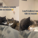 Otopiće i najtvrđa srca: Vlasnica dve mačke usnimila najlepši mogući trenutak (VIDEO)