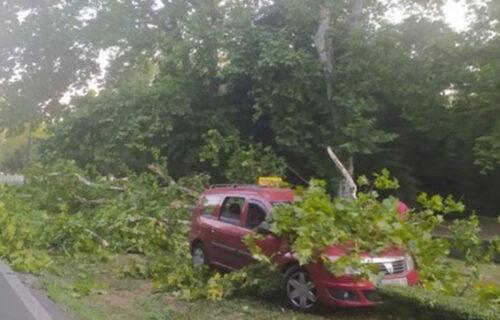 HAOS na Savskom vencu: Drvo palo na taksi u pokretu - saobraćaj BLOKIRAN
