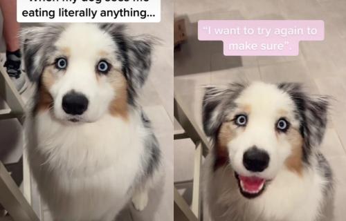 Da li biste mogli da mu ODOLITE? Vlasnica snimila kako pas izgleda svaki put kad vidi da ona nešto JEDE