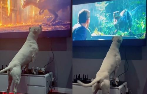 Želeo je da pogleda film u miru i tišini, ali se njegovom psu nije dopalo ono što je na TV-u (VIDEO)