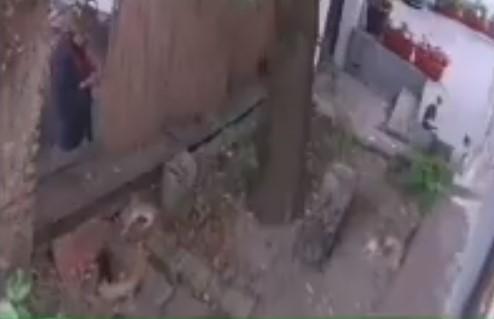 """""""Bacila je OTROV, ubila mi je četiri mačke"""": Užasna scena u Beogradu - snimak je poslat policiji (VIDEO)"""