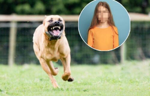 DRAMA u Zvezdarskoj šumi! Dva pit bula napala dete i štene: Komšije sprečile fatalan ishod