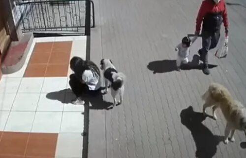 Zamenio je za banderu: Pas prolazio pored devojke, pa joj jednim potezom uništio dan (VIDEO)