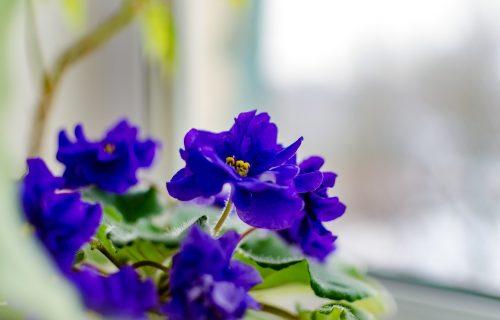 Iskusni cvećari objašnjavaju: Na koji način možete da NEGUJETE i zalivate svoje biljke dok ste na ODMORU?