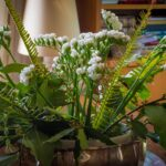 Verovanja: Ove biljke će vam doneti PARE, ljubav i svetlu budućnost, ali samo pod jednim uslovom