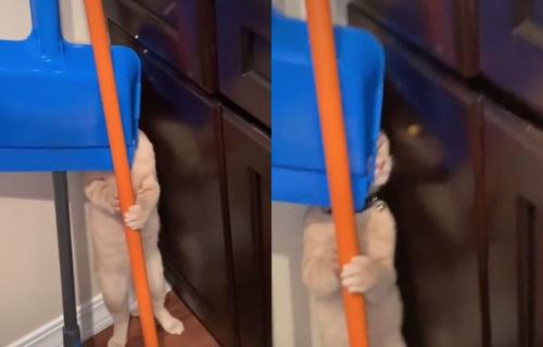 Odlučio je da se igra skrivača, a zbog mesta na kome se sakrio, ovaj MAČAK je izazvao salvu SMEHA (VIDEO)