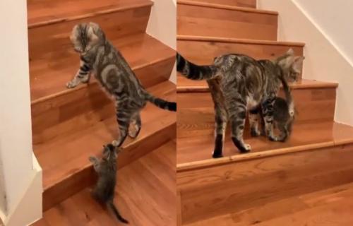 Majka je majka: Mače je imalo problem da se popne uz stepenice, a onda ga je ona MOTIVISALA (VIDEO)