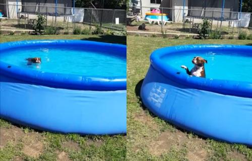 Ovaj pas toliko voli da provodi vreme u bazenu, da je vlasnica morala da ga PODMITI da izađe (VIDEO)