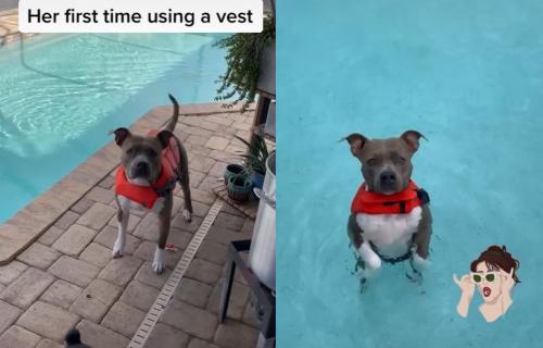 Stavila je ženki psa pojas za spasavanje, a ono što je ona zatim uradila ju je RAZNEŽILO (VIDEO)