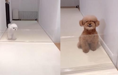 Napravio prepreku, pa snimao REAKCIJE svojih pasa: Ovaj video je pravi HIT