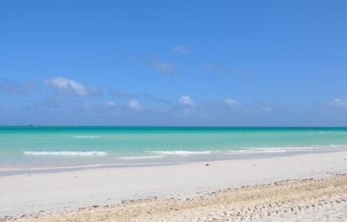 Pronađeno BIZARNO stvorenje na plaži: Iskopavali gnezdo, pa se ŠOKIRALI otkrićem (FOTO)
