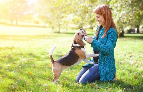 Popravljaju raspoloženje i utiču na celokupno ZDRAVLJE: Tri razloga da nabavite PSA kao kućnog ljubimca