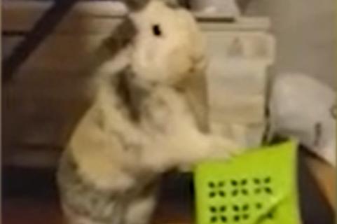 Sećate se zeca s Voždovca kog je KRSTIO POP? Stvorenje od tri kilograma sad je napravilo karambol (VIDEO)