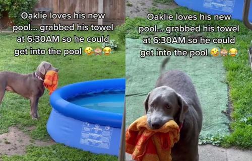 Vlasnica mu zabranila da se kupa u bazenu, a njegov tužan pogled će vas RAZORUŽATI (VIDEO)