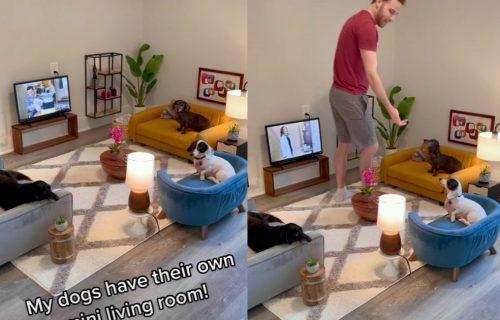 Napravio je svojim psima pravu DNEVNU SOBU, izgled će vas oduševiti (VIDEO)