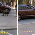 Šta ovo ODZVANJA Vračarom? Vozač spustio prozore na DŽIPU, pa šokirao prolaznike (VIDEO)