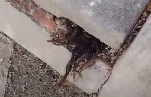 Video KOSU kako izvire iz groba: Objašnjenja su JEZIVA, tvrde da tela ne treba pokopavati na ovim mestima