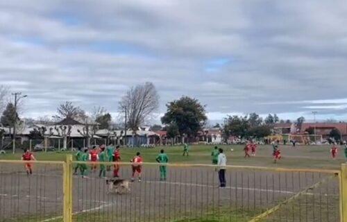 Hit momenat sa utakmice u Čileu: Kuče uletelo na teren i postiglo evrogol leđima! (VIDEO)