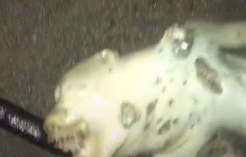 Šta je ovo?! Snimila leš ČUDNOG STVORENJA na plaži koje je mnoge zbunilo i šokiralo (VIDEO)