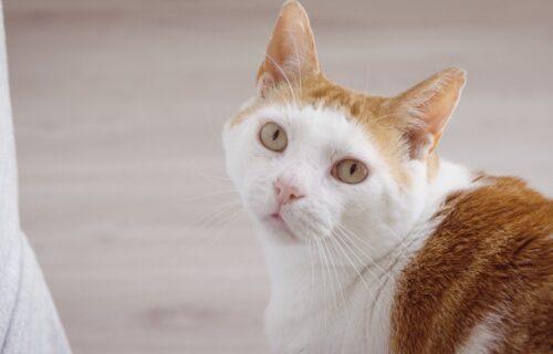 Stara narodna verovanja: Ako vam se mačka pojavi na vratima i ne želi da ODE, to ima svoje ZNAČENJE