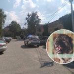 """""""ČUDNE su okolnosti pod kojima se desila tragedija"""": Evo zašto je pas ISKASAPIO ženu u Kragujevcu"""