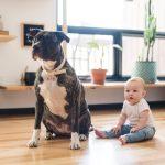 Biće aktivnije i ZDRAVIJE: Četiri razloga zbog kojih vaše dete treba da ODRASTA uz kućnog ljubimca