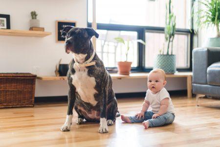 Spadaju u NAJOPASNIJE vrste na svetu: Rase pasa koje ne bi trebalo da GAJITE ako imate malu decu